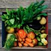 Box di verdura medio