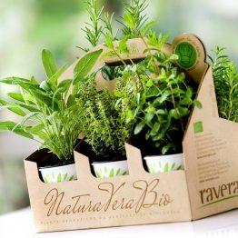 Box Mix di piante aromatiche