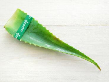 Foglia di Aloe