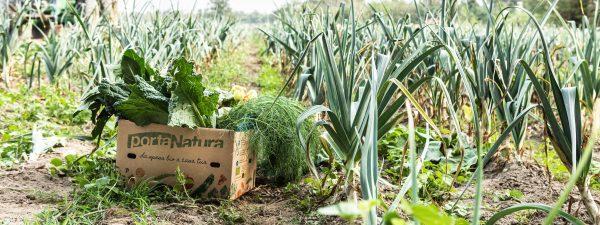 Box di frutta e verdura